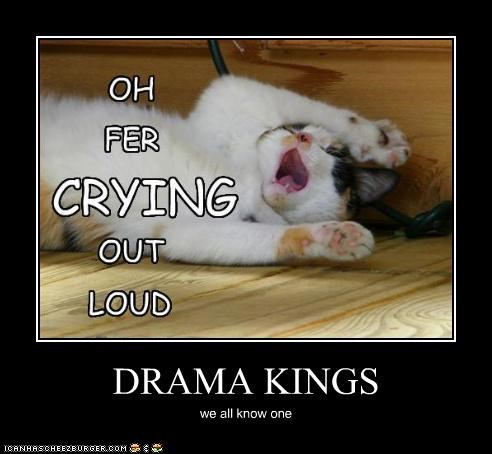 DRAMA KINGS we all know one