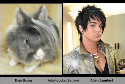 adam lambert,animal,bunny,emo,emo bunny
