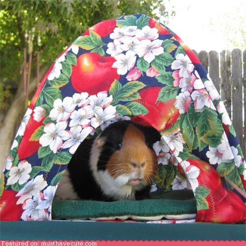 animals house pets shelter tent - 4383128064