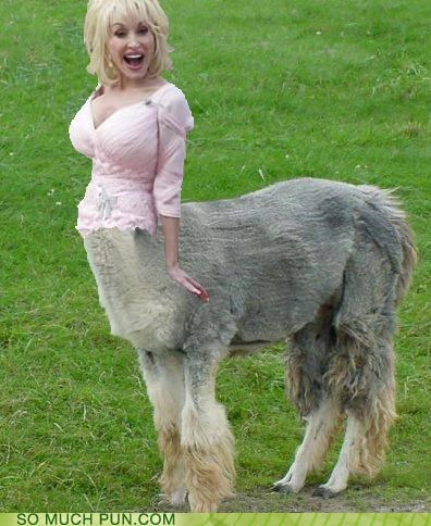 do-i-ever-cross-your-mind,dolly,dolly parton,homophones,literalism,llama,parody,photoshop,rhyme,song