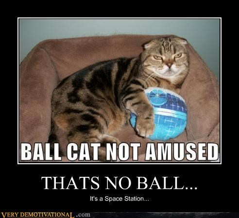 cat,star wars,amused,ball