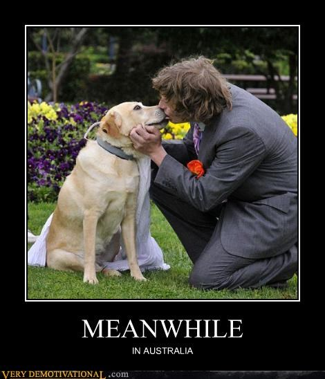 man australia Meanwhile dogs married - 4383693056