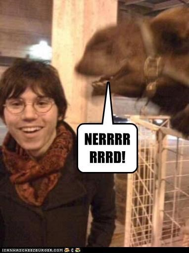 camel,critters,derp,fence,glasses,nerd,scarf