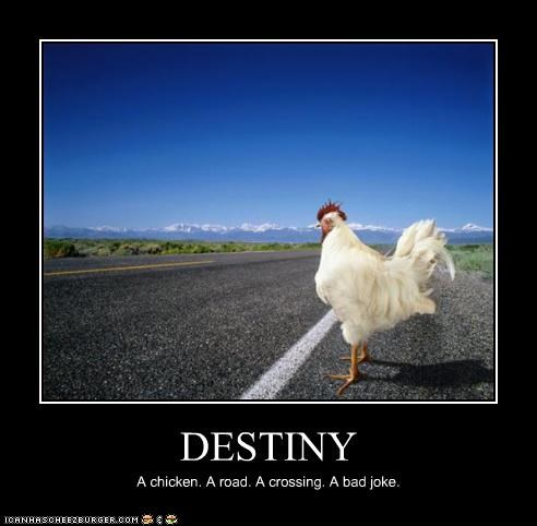 bad caption captioned chicken crossing destiny joke road - 4383832832