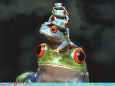 cute face frog - 4385199872