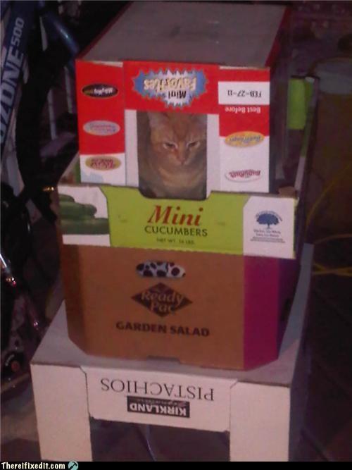 animals,cardboard,pets