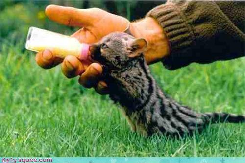 baby bottle cat feed spots stripes whatsit wednesday - 4386093056