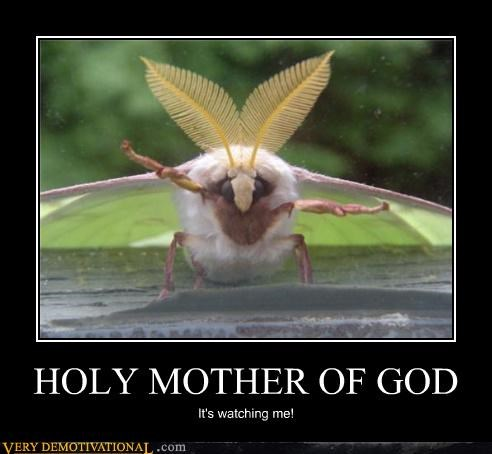 scary mother of god watching moth