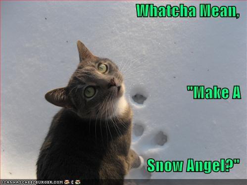 Cheezburger Image 4386182656