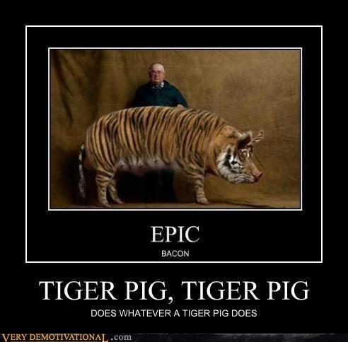 pig,tiger,amazing