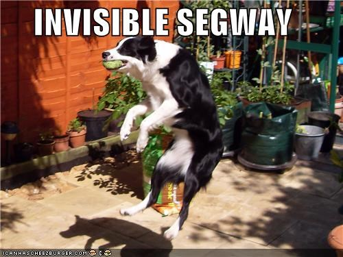 ball border collie catching fetch invisible jumping playing segway