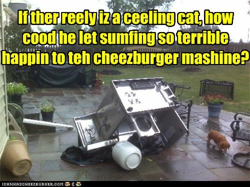 betrayed ceiling cat cheezburger dachshund grill long haired machine question ruined Sad - 4386441984