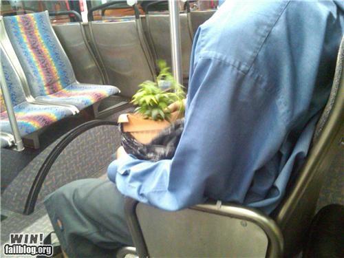 drugs marijuana public transportation - 4386509056