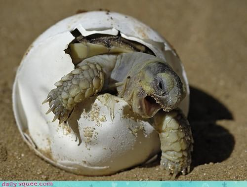 baby cute face turtle - 4386527232