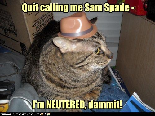 annoyed,calling,caption,captioned,cat,difference,frustrated,name,neutered,quit,Sam,spade,upset