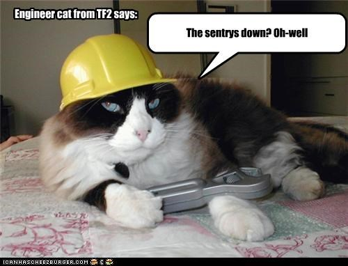 Engineer cat from TF2 says: The sentrys down? Oh-well