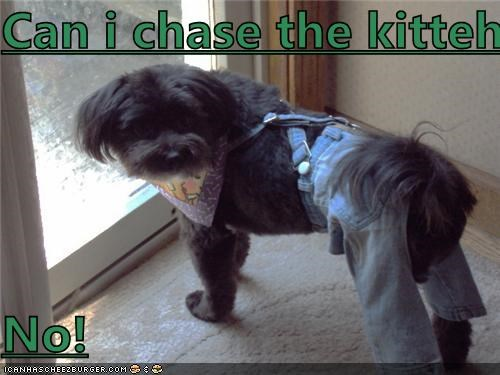 Cheezburger Image 4387122944
