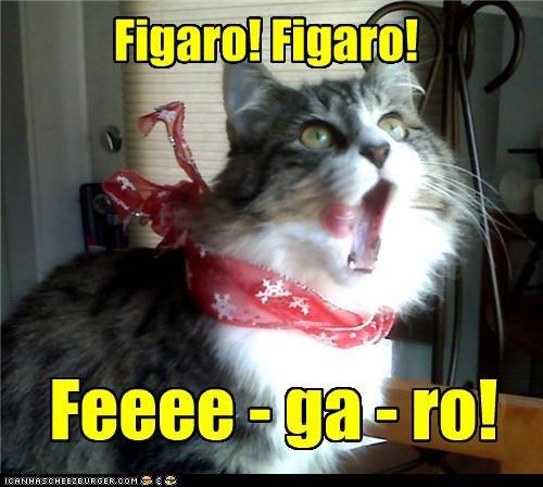 Figaro! Figaro!