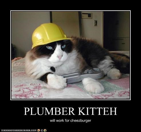 PLUMBER KITTEH will work for cheezburger