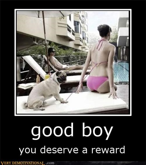 Sexy Ladies,bikini,good,dogs