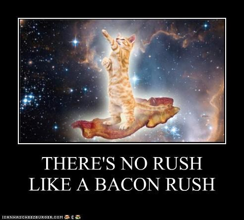 bacon,cat,drugs,hipsterlulz,lsd