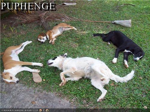 Cheezburger Image 4387684352