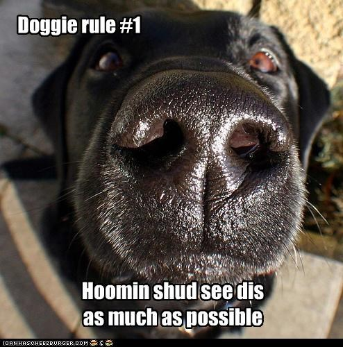 Doggie rule #1 Hoomin shud see dis as much as possible