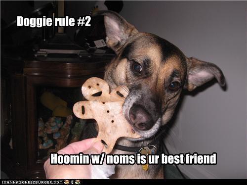Doggie rule #2 Hoomin w/ noms is ur best friend