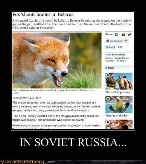 shoots,fox,hunter,Soviet Russia