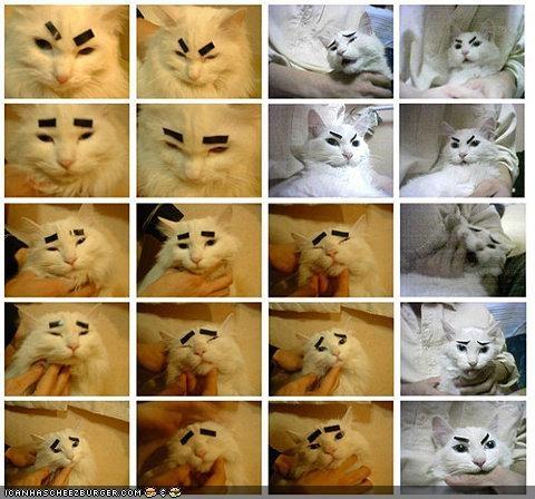 Cat - CANHASCHEE2BURGER coM