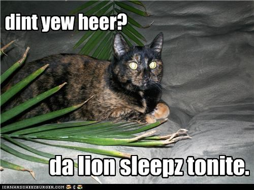 caption captioned cat lion lyrics news question sleeping sleeps song tonight - 4388718336