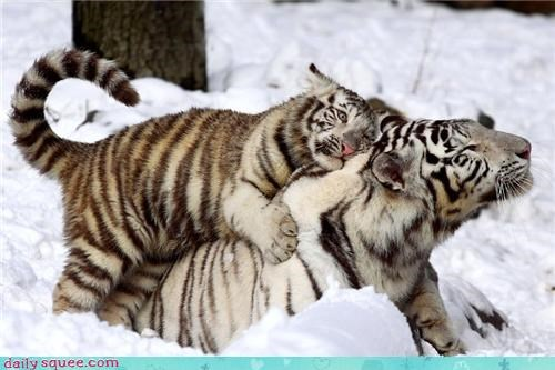 baby hug hugs mom snow squee spree tigers white