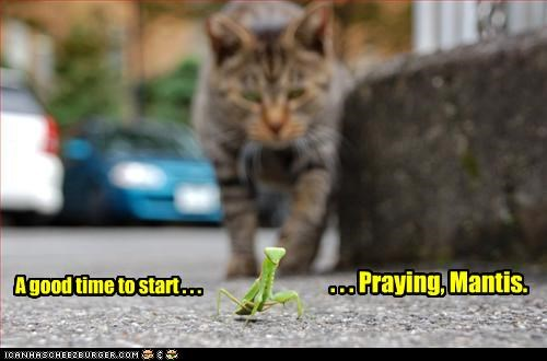 caption,captioned,cat,fyi,good,mantis,praying,preying,preying mantis,pun,start,time