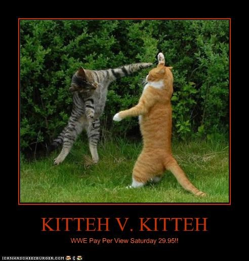 KITTEH V. KITTEH WWE Pay Per View Saturday 29.95!!