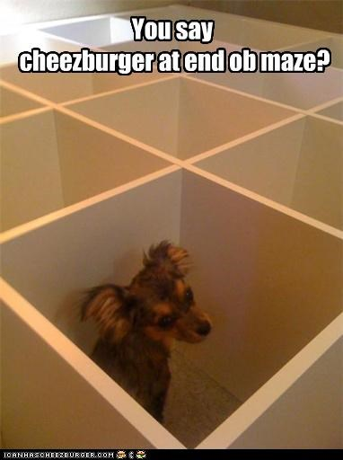Cheezburger Image 4389483008