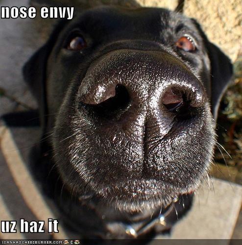 Cheezburger Image 4389648640