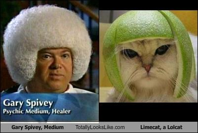 animals Cats gary spivey Lime Cat limecat lolcats medium wtf