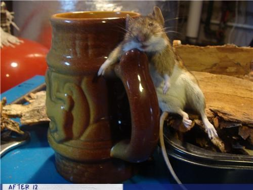 drunk mouse odd wood wtf - 4390223872