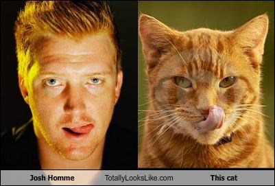 Cats josh homme lick lolcats queens of the stone age tongue - 4390405120