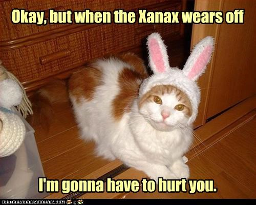 allowing,bunny,bunny ears,caption,captioned,cat,costume,dressed up,just saying,Okay,sedated,tabby,warning,xanax