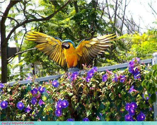 bird,flowers,parrot,Tropical,wings