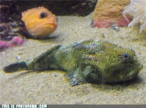 Animal Bomb animals fish staring into my soul - 4390724096