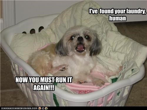 I've found your laundry, human NOW YOU MUST RUN IT AGAIN!!!