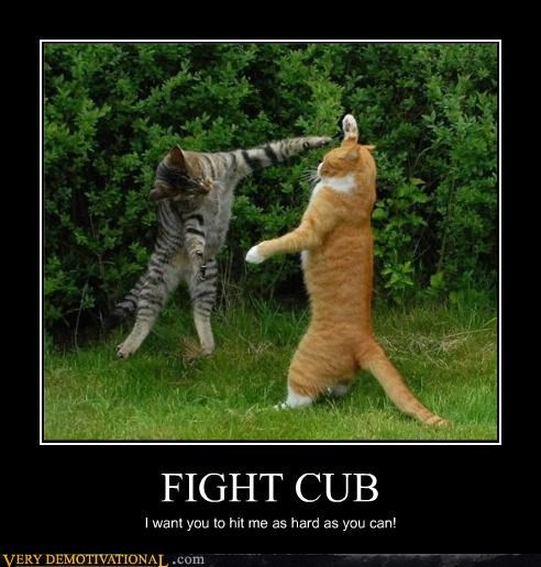 awesome Cats fight club - 4390882816