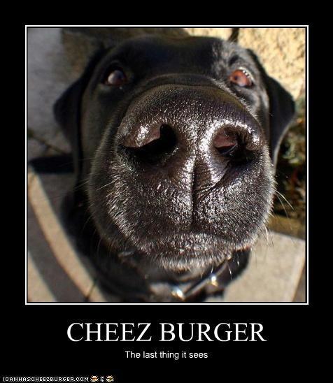 Cheezburger Image 4390897152