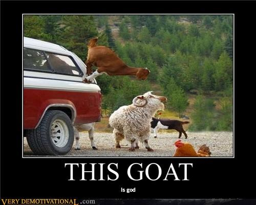 god,goat,wtf,awesome