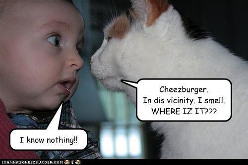 Cheezburger Image 4391190272