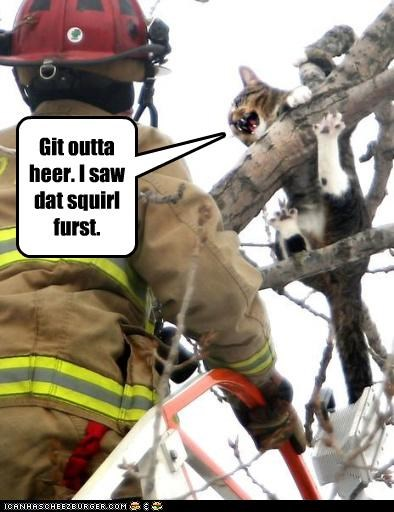 caption,captioned,cat,claiming,dibs,fireman,first,get out,go away,ladder,rescue,saw,shoo,squirrel,stuck,tree
