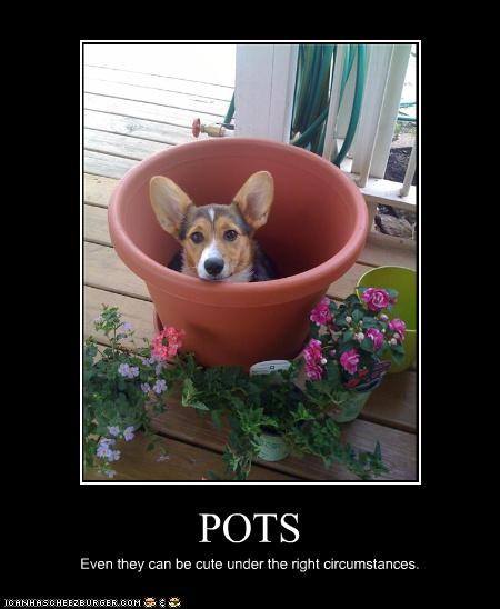 POTS Even they can be cute under the right circumstances.