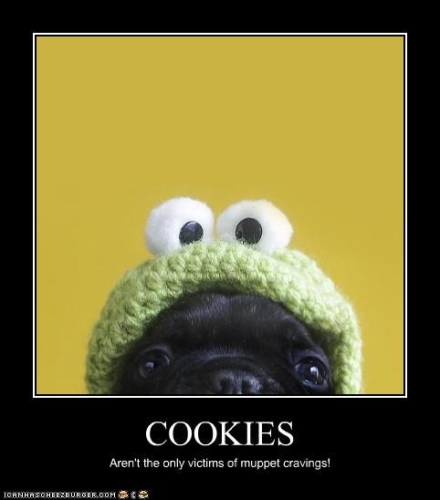 afraid,attacked,cookies,costumed,cravings,dressed up,halp,help,muppet,muppets,pug,puppet,victims